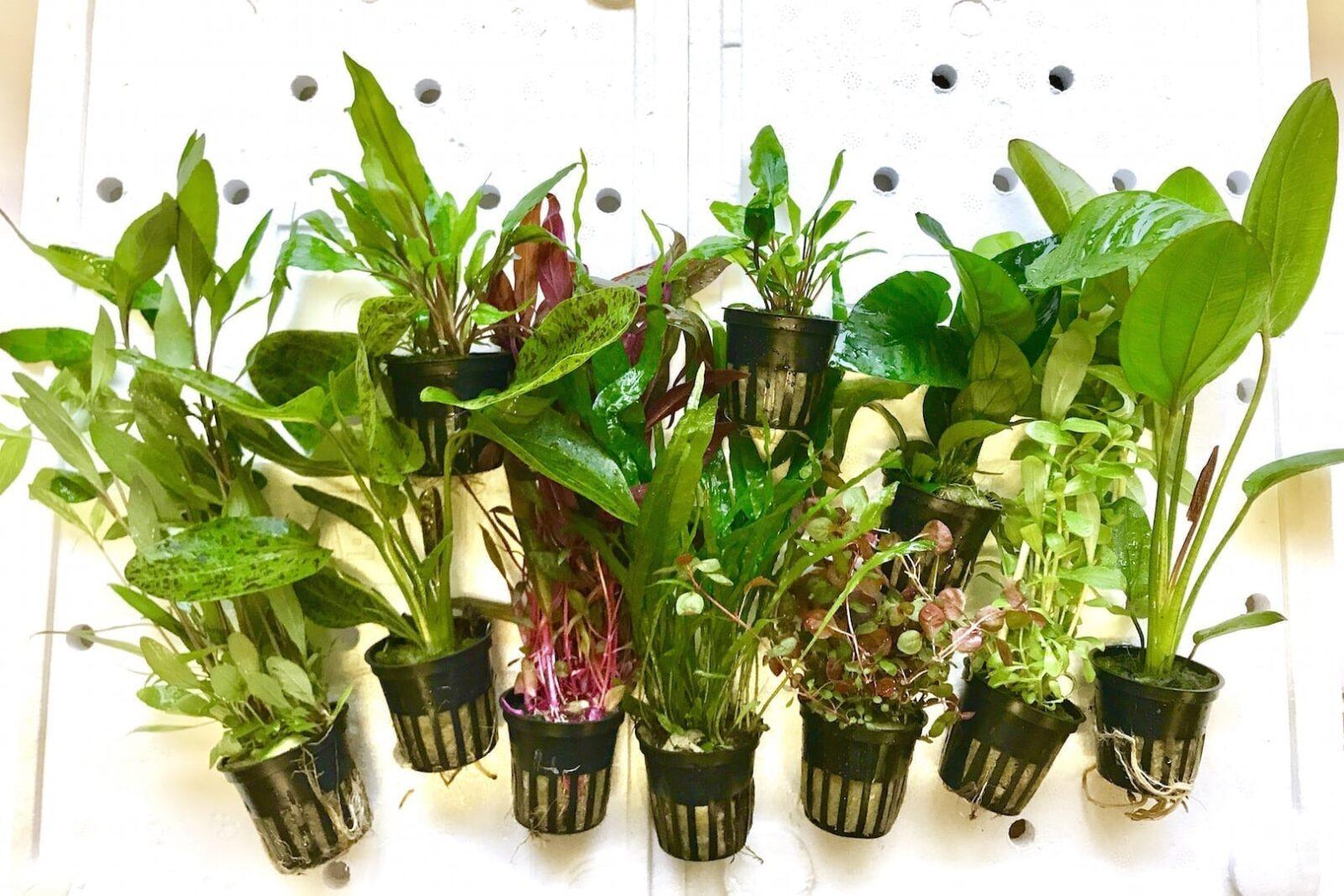 AssortedTropicapotPlants Aquaticplant