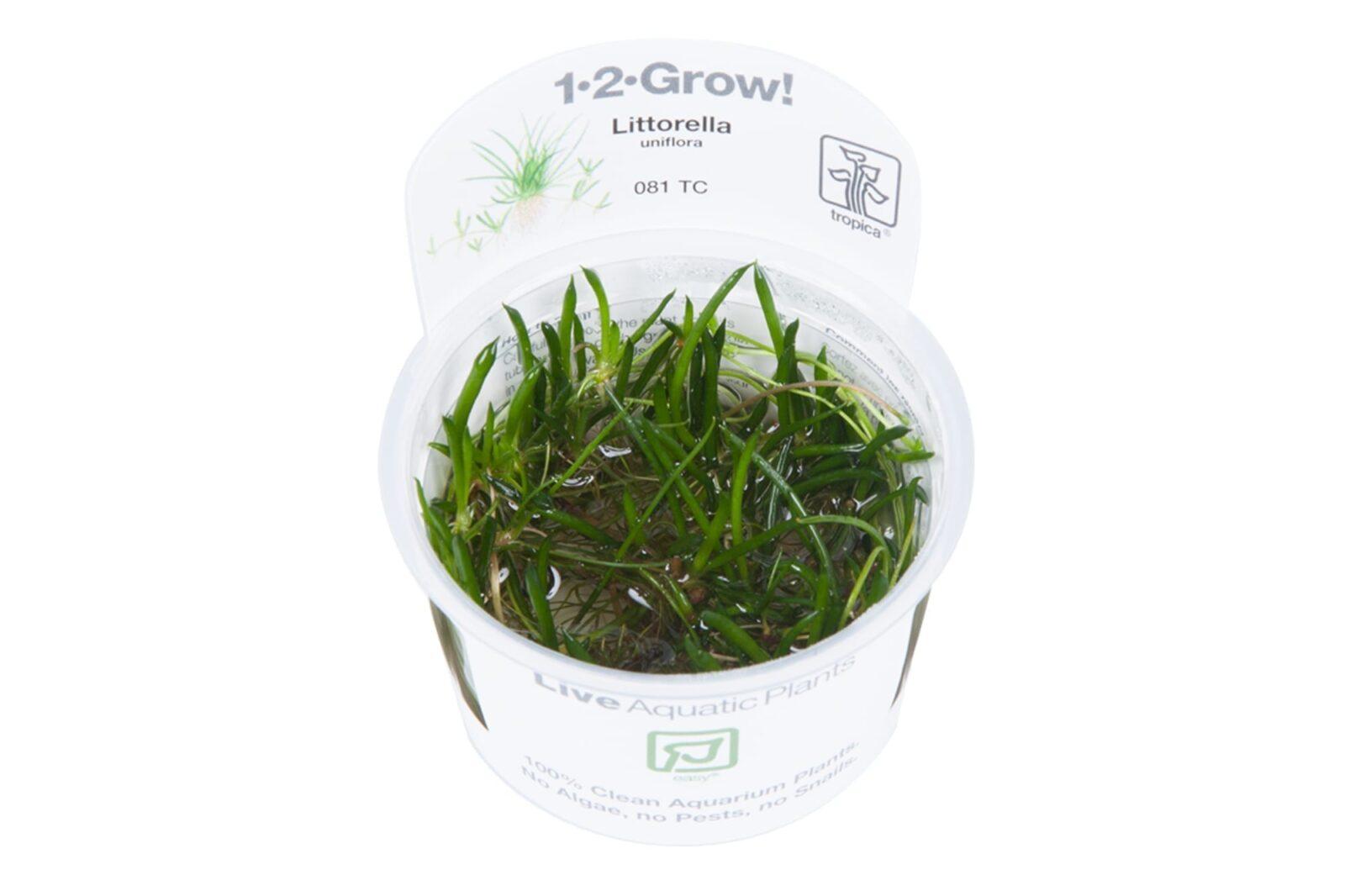 Littorellauniflora(  Grow)